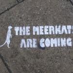 meerkat are comming